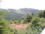 Wittgensteiner Landschaft